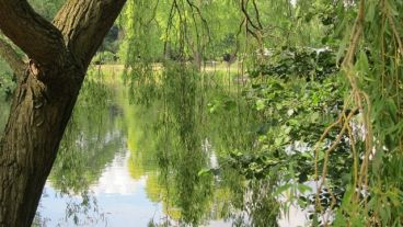 Beautiful lake at Buckingham Palace.