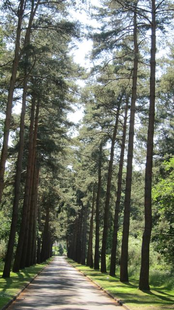 The road leading to Brookwood Cemetery, England