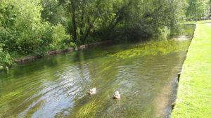 Swim your passion - image taken at Mottisfont Abbey